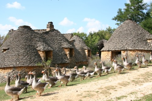geese at Les Cabanes de Breuil